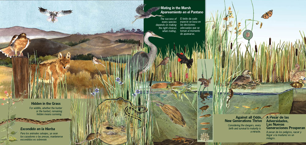 Watsonville wetlands watch for Creating a mural