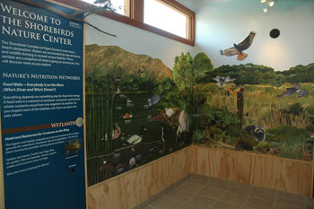pajaro shorebirds wall mural