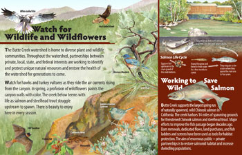 wildlife and wildflower panel