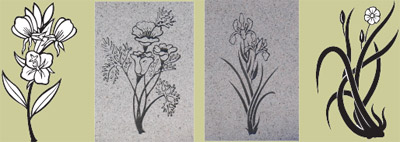 native plant drawings