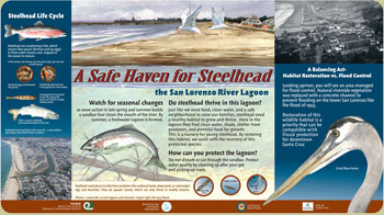 safe haven for steelhead panel