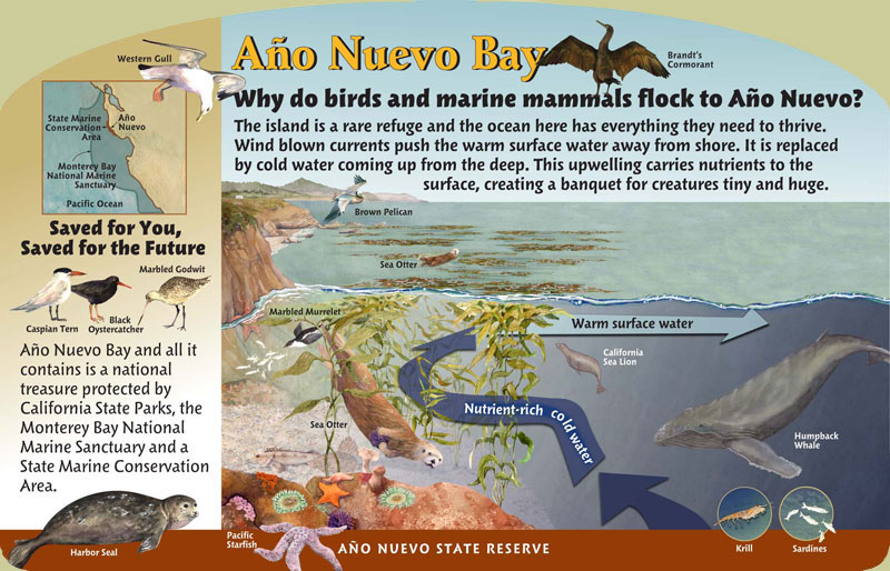 Año Nuevo State Reserve, Bay Panel